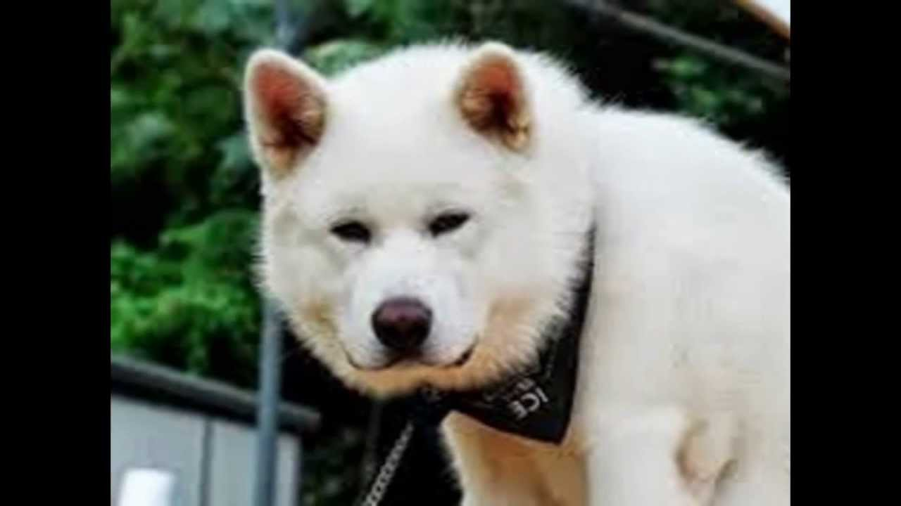 TOP 10 BEAUTIFUL DOGS