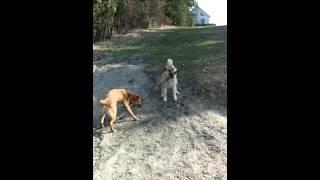 combat entre Rex et Jack