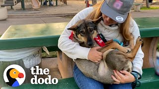 Dog Always Tucked His Tail Between His Legs Until... | The Dodo Adoption Day