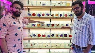 Betta Fish Shop Xotic Aquatics