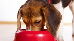 10 Foods Your Dog Should Never Eat
