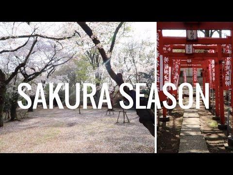 Sakura Season | Rachel Dea