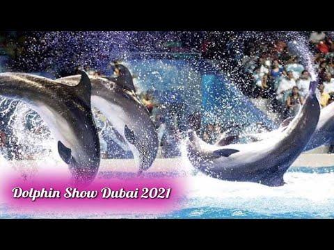 Dubai Dolphin Show 2021 PART – 2    Sea World's Dolphin Show    Aisha Mughal #dubai #DolphinShow