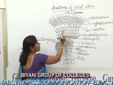 Anatomy Of Dicot Stem Lecture Bed By Aarti Gupta Youtube