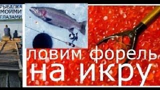 Как ловить форель на красную икру и на кальмара(Как ловить форель на красную икру и на кальмара. В этом видео я расскажу о том как можно успешно ловить форе..., 2016-11-14T13:21:25.000Z)