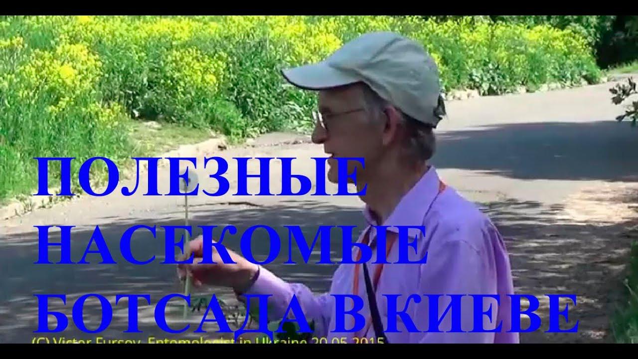 Экскурсия Энтомолога: Полезные Насекомые Ботсада  Киев Украина