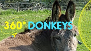 Meet the Donkey's in Spitalfields City Farm | 360 Degrees for Kids