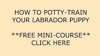 **how To Potty-train A Labrador Puppy**bow !! Click Here