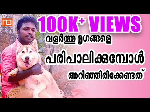 How To Train Dogs & Cats Malayalam | True Ways To Train Animals | Avittam Media