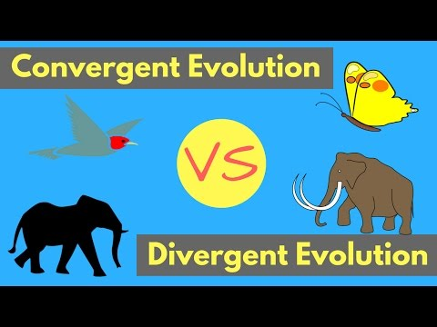 Convergent Evolution vs Divergent Evolution | Shared Traits Explained