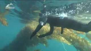 Подводная охота на белого морского окуня(Профи подводной охоты выходят на промысел белого морского окуня. В видео также рассказывается о восстановл..., 2012-06-03T21:49:18.000Z)