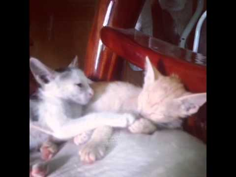 Cutest Cat Moments