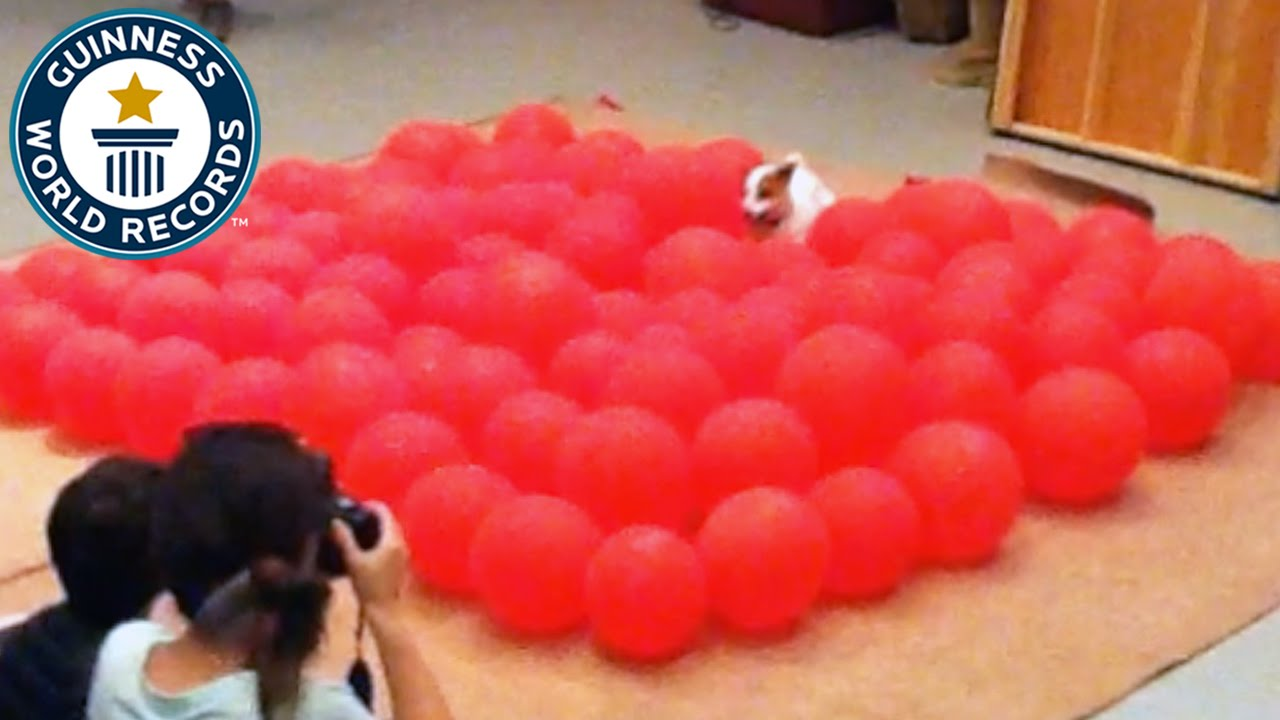 fastest time to pop 100 balloons by a dog guinness world records