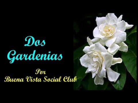 Dos Gardenias (Two Gardenias) - Buena Vista Social Club (Subt. en español & English)