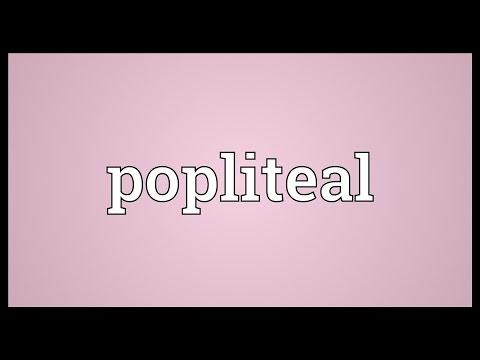 Header of popliteal