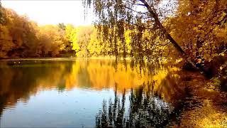 Решил погулять по парку, усадьба Быково, золотая осень.