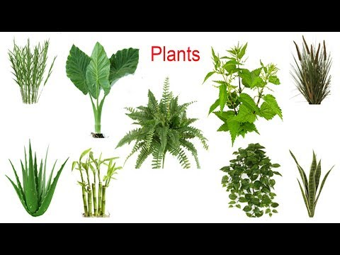 Plant Names, Meaning & Pictures | plants vocabulary