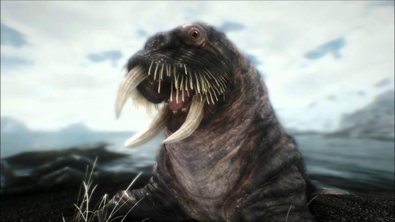 Robbaz walrus randevú