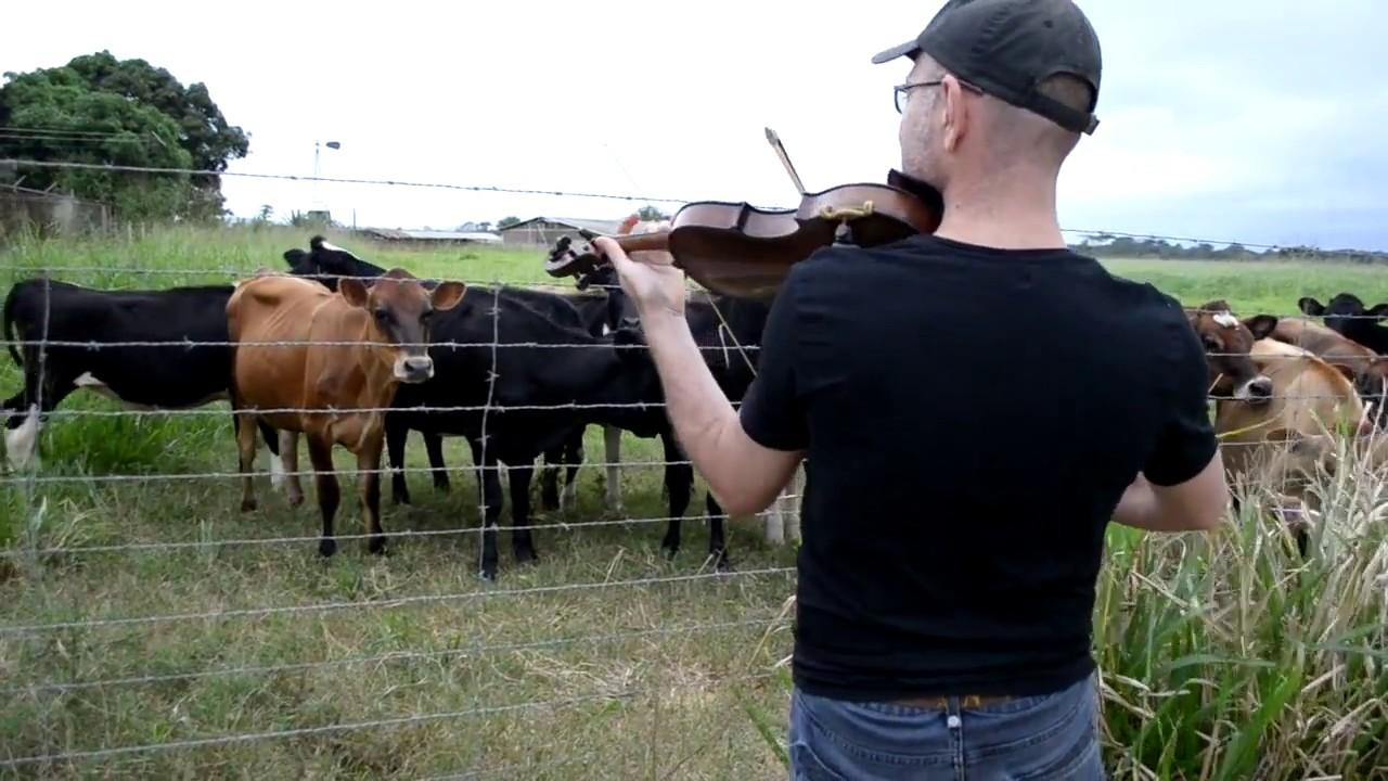 Violinista Ernesto Molina -  La Vaca Mariposa (El Becerrito) de Simón Díaz