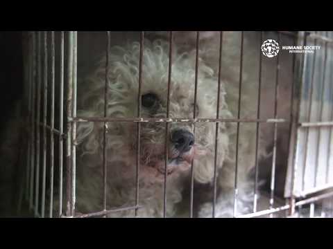 Costa Rica Dogs Rescued From Cruelty & Neglect