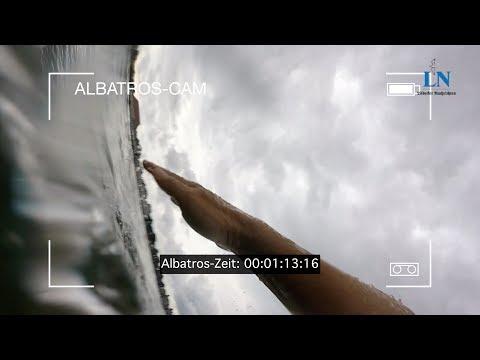 Orca vs. Albatros: Wettschwimmen (Folge 6)