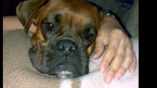 Nothing Compares ... * My Boxer Dog Queency ... R. I. P.