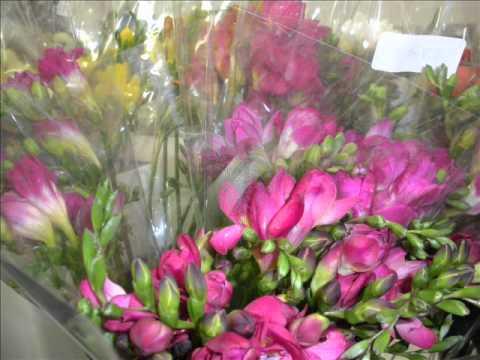 Cleveland Plant & Flower Co, Parma, Ohio  Product Tour & Show Reminder  4 5 11  2nd