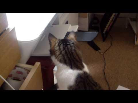Print Cat 001