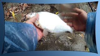 Рыбалка на реке Кубань октябрь 2019