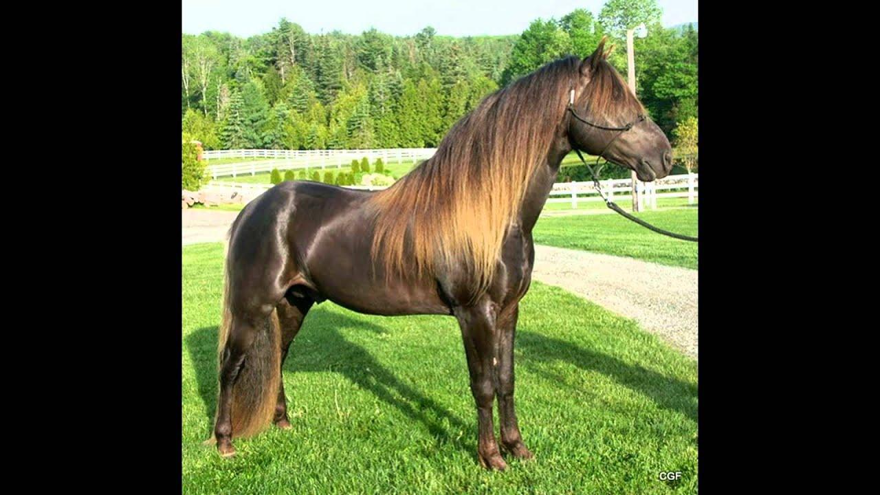 Der Pferd