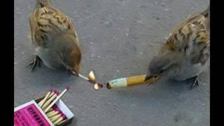 Смешные птицы 5