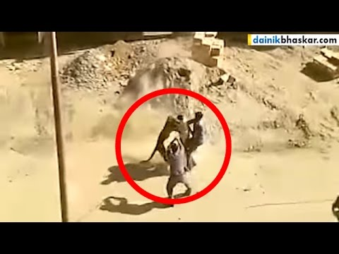OMG! Leopard Attacks Labourers at Meerut Cantonement | Caught on Camera
