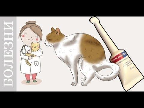 О том, как поставить клизму кошке в домашних условиях, смотрите в этом 83