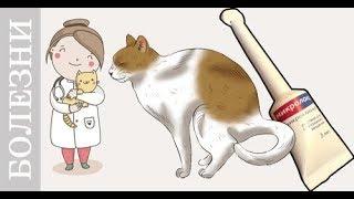 Запор у кота или как поставить клизму кошке, собаки. Советы ветеринара