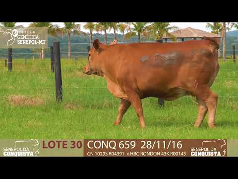 LOTE 30 CONQ 659