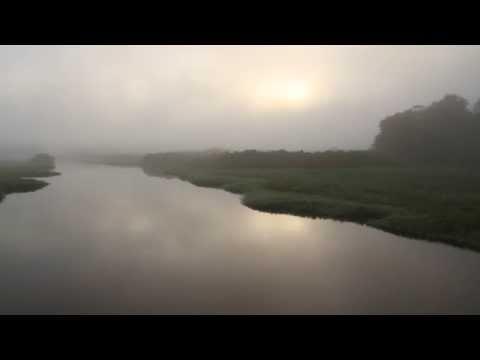Marais de Kaw à bord du Morpho