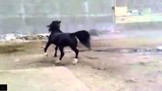 Лошадь красиво показывает себя как в фильме