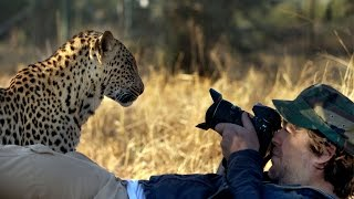 Leopard Tries to Eat Camera