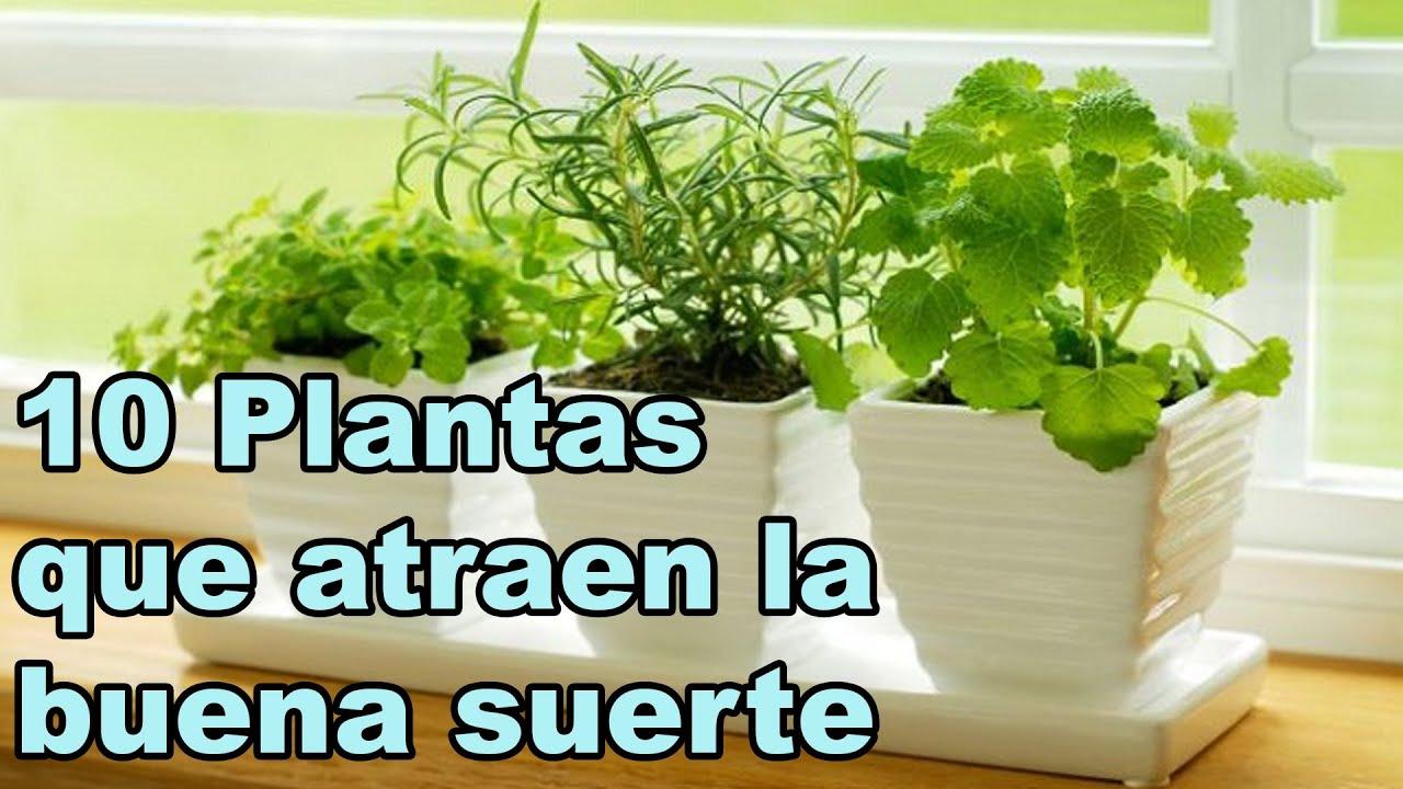 10 plantas que dan buena suerte y mejoran la armon a de tu for Armonia en el hogar decoracion