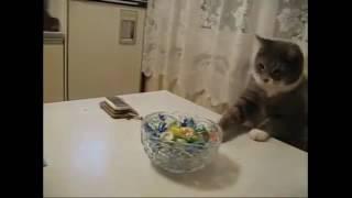 Стоимость усыпления кота на дому Москва