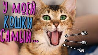 10 ИНТЕРЕСНЫХ ФАКТОВ О МОЕЙ КИСКЕ :)