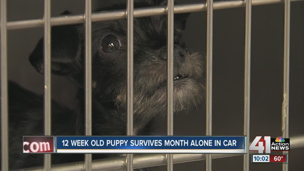 Puppy stuck in abandoned car for 1 month