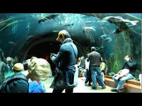 San Francisco's Tourist Attraction - California Academy of Sciences (HD)
