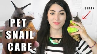 How to care for Giant African Land Snails - Pet Snail Care Video. L...