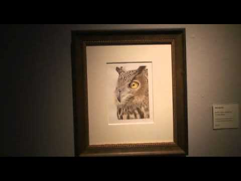MICHELSON BIRD ART