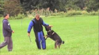 K9 Unlimited Frank Psa Pdc