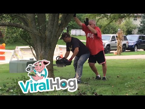 Tree Cutting Fail || ViralHog
