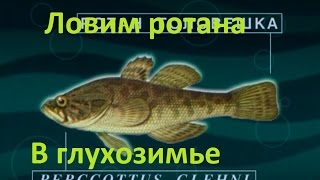 Діалоги про риболовлю -124 - Ловимо ротана в глухозимье.