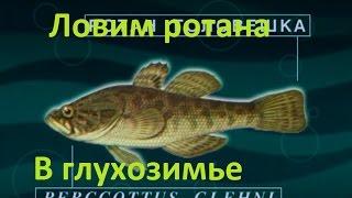 Диалоги о рыбалке -124- Ловим ротана в глухозимье.