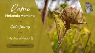 Rumi - Metanoia Moments (God's Mercy)